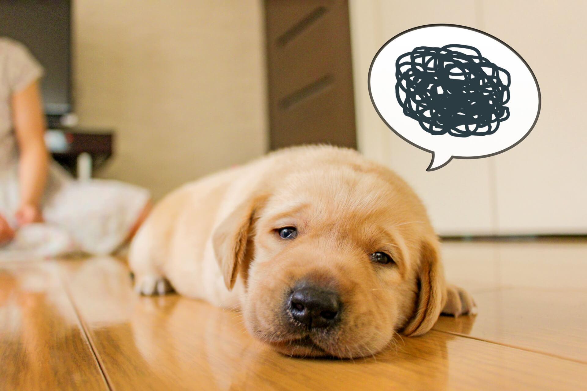 悩んでモヤモヤしている犬